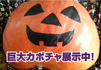 【ハロウィン】超巨大かぼちゃ展示中!