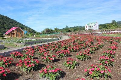 天空の花畑プレオープン