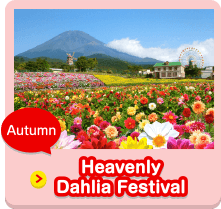 Autumn Heavenly Dahlia Festival