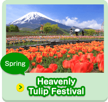 Spring Heavenly Tulip Festival
